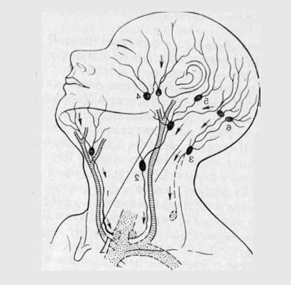 лимфни възли на лицето