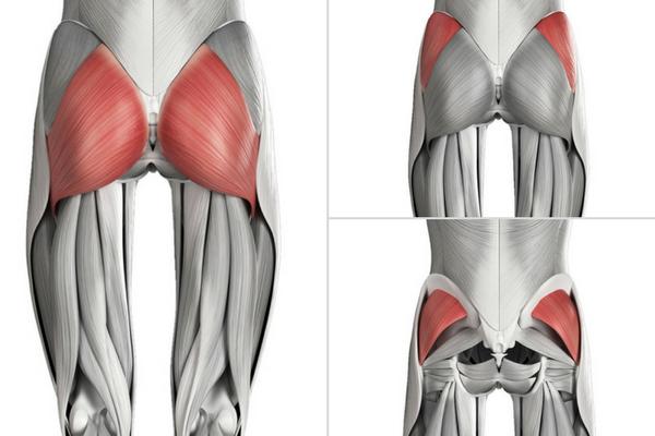 мускули на таза