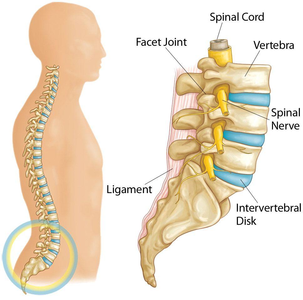раздвижване на гръбначния стълб