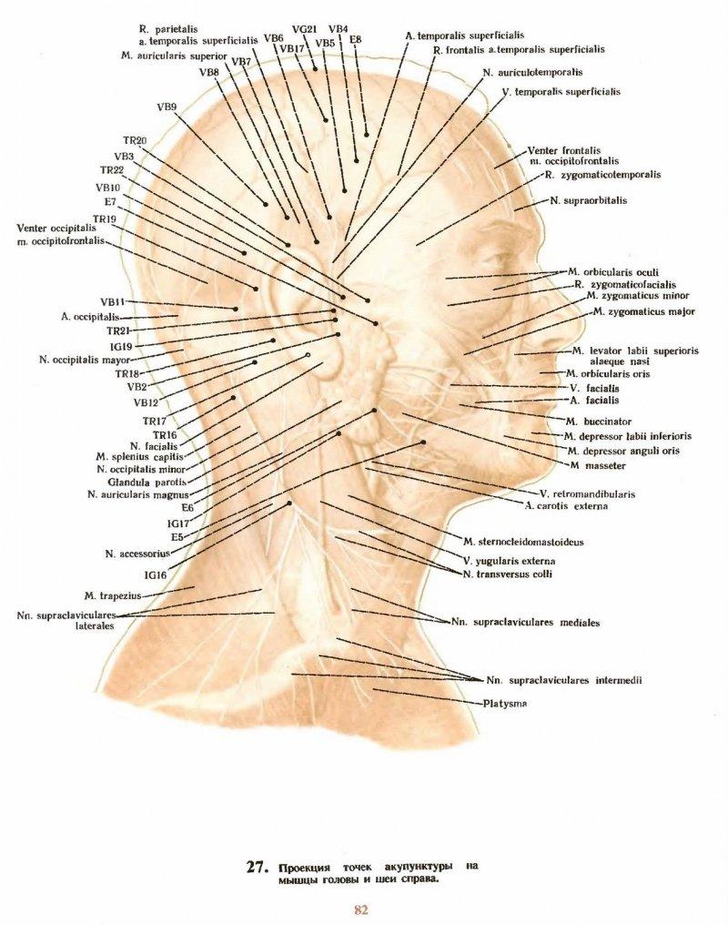биологично активни точки на главата